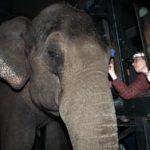 Artis olifant Win Thida krijgt contactlens